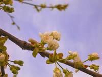 Frühling und Obstblüte in Oberkrumbach – Das Erlebnis vor der Haustür