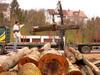 Neues Holz aus der Hersbrucker Alb