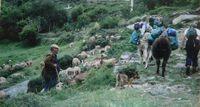 Wandern mit sanften Lamas – Fortsetzung 6 und Schluss