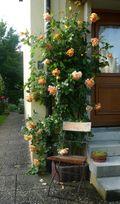 Rosenwochen in Hersbruck