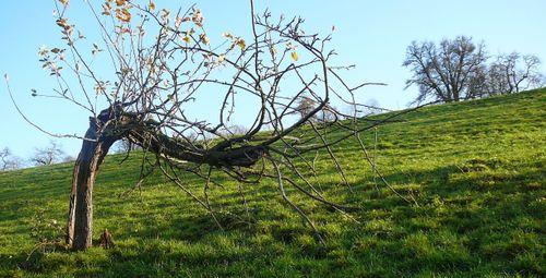 Der krumme Baum
