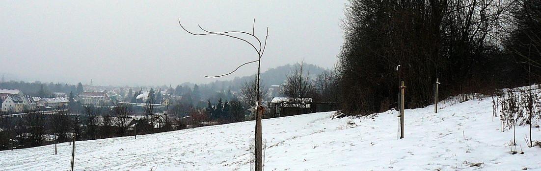 Winter im Obstsortengarten Hersbruck