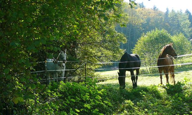Das Ende des 'Indian Summer' im Sittenbachtal