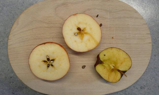 Äpfel von der Streuobstwiese Hersbruck in der Umweltschule Reichenschwand