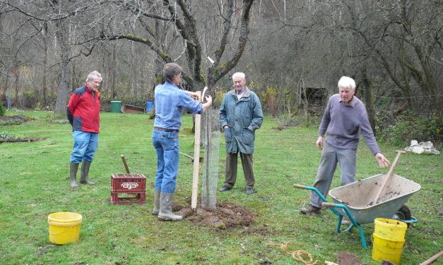 Einen Baum pflanzen in sechs Schritten