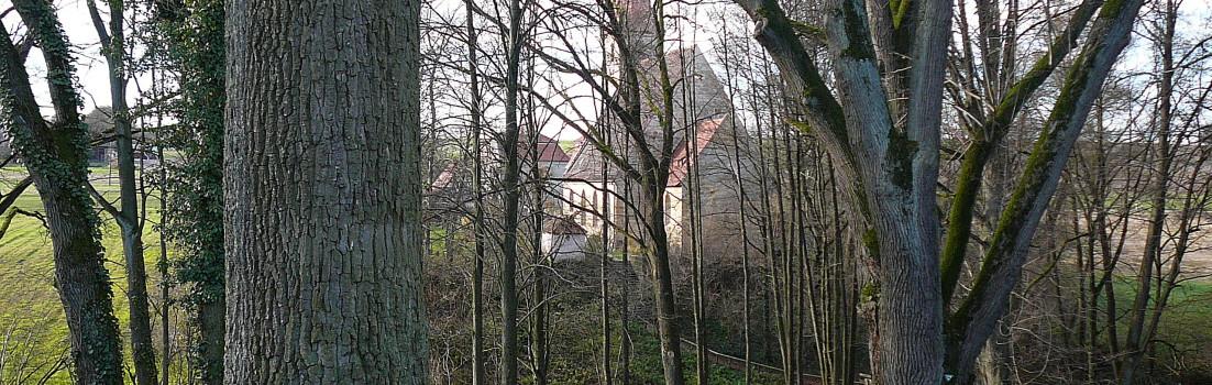 Der Dorn-Espan (Hutanger) bei Beerbach, Ortsteil von Lauf a.d.Pegnitz