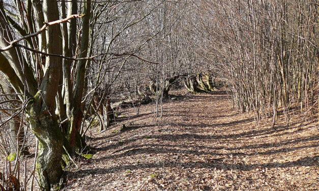 Rund ums Brandholz zwischen Hartenberg und Vorderhaslach