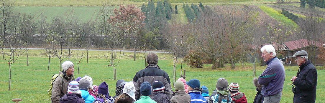 Der erste Quittenbaum auf der Streuobstwiese in Hersbruck!
