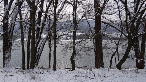 Bäume am Happurger Stausee – Hersbrucker Alb