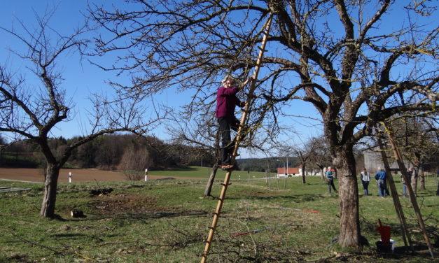 Von alten Obstbäumen, Flechten, dem Erlöser, der Tiroler Steigtanne und aufleiten ist hier die Rede
