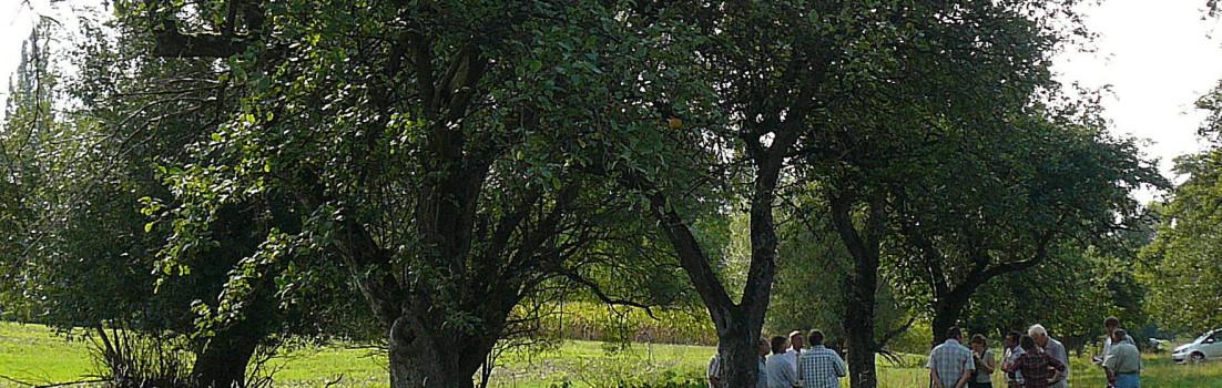 1000 Obstbäume für die Frankenalb und was daraus werden soll