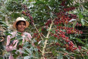 Hersbruck wird Fairtrade Stadt – Verleihung der Auszeichnung am 20.10.12 um 11:00