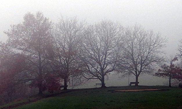 Bäume, Nebel und Hermann Hesse