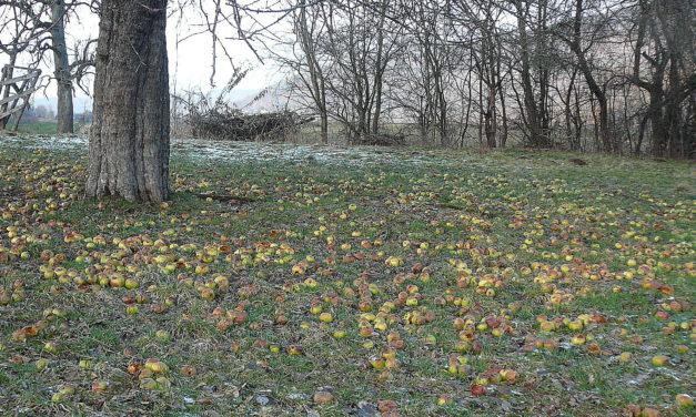 1000 Bäume für die Frankenalb: Nach der Kartierung folgen die Reiser