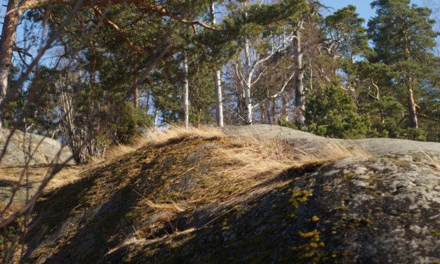 Schreinern auf Finnisch – Bericht für den Jahresbericht der Berufsschule