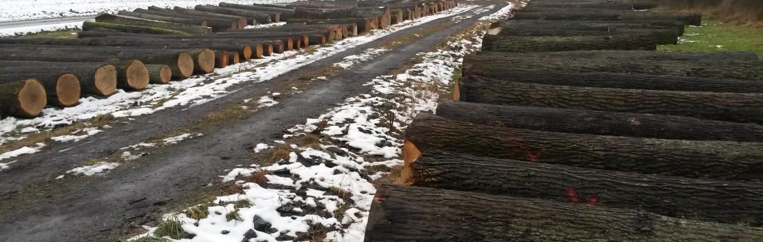 """""""Submission"""" heißt """"Wertholzversteigerung"""" und ist ein Teil unseres Holzeinkaufs"""