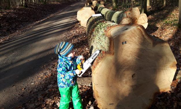 Die regionale Waldschöpfungskette bei der Wertholzversteigerung in Sailershausen und warum Kilian Stihl hat