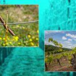 """""""Weinfranken"""" – Multimediavortrag von Lothar Mayer zum Jubiläum bei den 20. Unterkrumbacher Werkstatt-Tagen"""